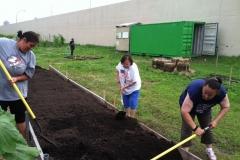 Little Earth urban farmers building raised beds